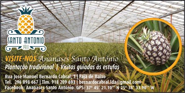 Ananases Santo António