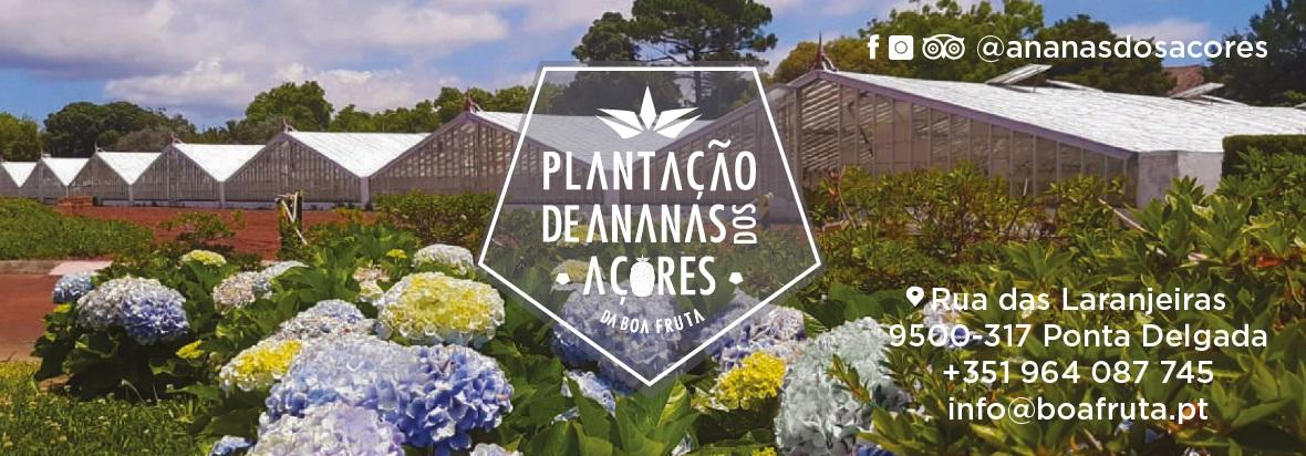 Plantação de Ananás dos Açores by Boa Fruta
